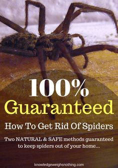 How To Get Rid Of Mice Fast Without Poison  Unwanted Pests Captivating How To Get Rid Of Spiders In Bedroom Inspiration