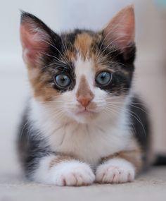 Cute Kitty by gavinsmith1971 on 500px.com