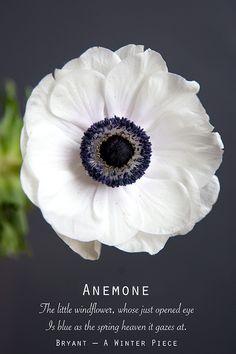 It feels like such a treat to spend money on flowers. Ranunculus Flowers, Anemone Flower, Anemones, My Flower, Pink Peonies, Simple Flowers, Fresh Flowers, White Flowers, Beautiful Flowers