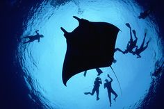 World's Most Beautiful Diving Sites. Manta Ray Lagoon Hawaii