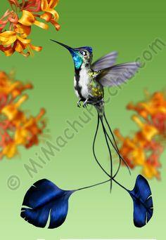 magnificent spatuletail hummingbird - Google Search