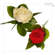 weddings-red-and-white-roses-simple-buttonholes-lg.jpg 400×400 pixels
