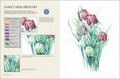 flowers-in-watercolour-by-wendy-tait-03 Watercolor Books, Kids Watercolor, Watercolor Mixing, Watercolor Disney, Watercolor Flowers, Watercolor Paintings, Beautiful Paintings Of Flowers, Outline Drawings, Painted Books
