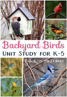 Download afree printable Backyard Birds unit study.