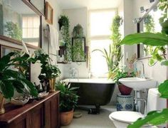 "The Best Bathroom Plants For Your Interior - The ""green"" bathroom - Best Bathroom Plants, Tropical Bathroom, Garden Bathroom, Botanical Bathroom, Bohemian Bathroom, Bathroom Green, Bathrooms With Plants, Small Bathrooms, Earthy Bathroom"