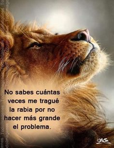 Quotes En Espanol, Lion, Life Quotes, Inspirational Quotes, Animals, Truths, Cool Quotes, Powerful Quotes, Motivational Quotes