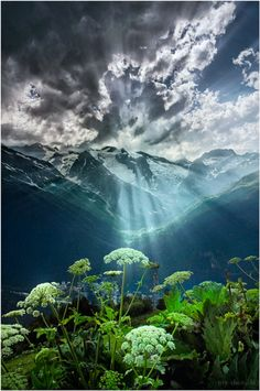 queen anne's lace .. X ღɱɧღ ||  Dombay, Karachay-Cherkess Republic, Russia Dombay… by my-shots