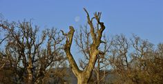 The Morning Moon by David Clendenen on Capture Kern County // The moon graced our morning on the grand day out.