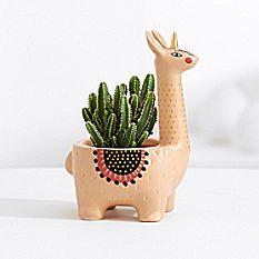 Llamacorn Cactus Plant