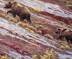 [EndLiss scans - Wildlife Art] Robert Bateman - Alaskan Autumn