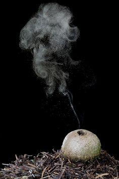 puffball.  photography by Rainer Harf via geo.de