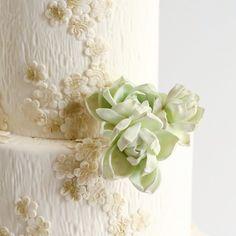 Maggie Austin #Succulents sugar flower    June #2015 #maggieaustincakes