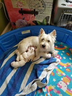 Cagney after her bath looking much better with her babies