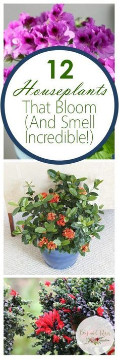 12 Houseplants That Bloom (And Smell Incredible!) | Houseplants That Bloom,  Low