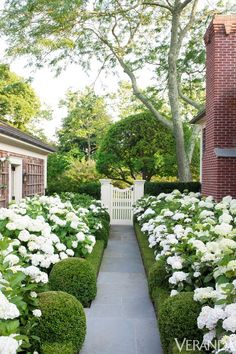 thefoodogatemyhomework: Rounded boxwoods, privet hedge, snowy hydrangeas, white gate, grey stone, brick and cedar shake - a perfect garden walk.