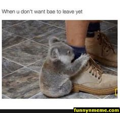 When you don't want bae to leave yet - Koala Funny - Funny Koala meme - - When you don't want bae to leave yet The post When you don't want bae to leave yet appeared first on Gag Dad. Super Funny Pictures, Super Funny Quotes, Funny Quotes For Teens, Funny Sayings, Koala Meme, Funny Koala, Funny Animals, Funny Boyfriend Memes, Gamer Boyfriend