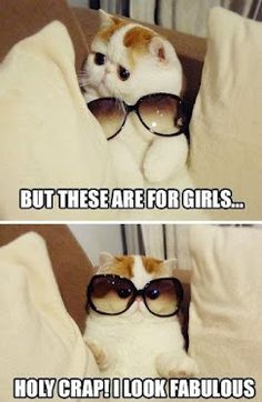 EVERYTIME. IT GETS ME EVERYTIME. Snoopy Cat, you kill me.