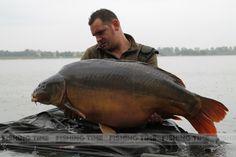 Big carp from Hungary