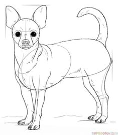 How to draw a chihuahua Drawing tutorial Dog Drawing Simple, Realistic Face Drawing, Realistic Rose, Cute Animal Drawings, Cartoon Drawings, Easy Drawings, Drawing Animals, Chihuahua Drawing, Drawing Tutorials For Kids