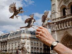 (63) Photos de Défendre les animaux et protéger la nature - Défendre les animaux et protéger la nature