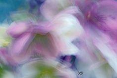 Flowers using the long exposure blur technique.