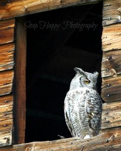Owl in Hayloft by Snaphappy72 on Etsy, $15.00