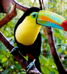 Costa Rica World Cultures, Countries Of The World, Latin America, South America, Costa Rica, Life Is Beautiful, Beautiful Things, Wild Creatures, United Airlines