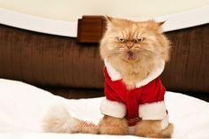 ✝☮✿★ CHRISTMAS CAT ✝☯★☮