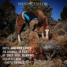 Cattle Drive, Boys Life, Wild Mustangs, Cowboy And Cowgirl, Wild Horses, Show Horses, Cowgirls, Wild West, Rodeo