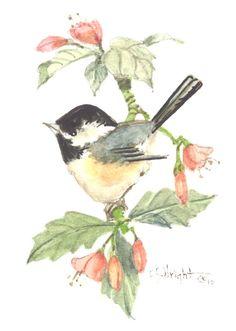 Chickadee watercolor $16.00