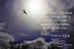 Psalms 55:6-7 love then would I wander far off and them remain in the wilderness. Selah.