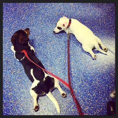 Met z'n twee wachten bij de dierenarts... ;-) #puppyEhkä #blijehond #puppyspam