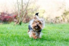 Photo-grapher Tammy Lynn Kwan sent in this lovely picture of her three-year-old Yorkshire terrier/Jack Russell cross Snapper.  Tammy adopted Snapper, three, from the RSPCA in the summer.  The picture was taken in Tammy's garden in Rodborough.  Find more