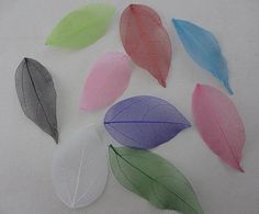 Organic Craft mixed color Natural skeleton leaves for DIY 100pcs Free shipping