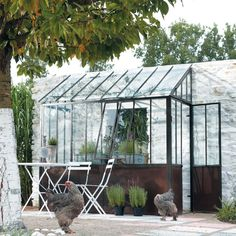 Nice green house with hens