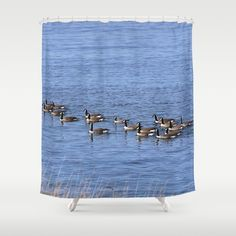 New, Goosing around  https://society6.com/product/canadian-geese-swimming_shower-curtain?curator=danbytheseacurator Available as over 20 different products  Follow DanByTheSea  https://society6.com/danbythesea #society6 #DanByTheSea
