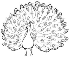 Realistic Peacock Coloring Page Free Printable Peacock Coloring