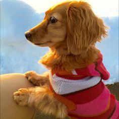 sakuさんの、ワンコ部U^ェ^U,犬部,いぬばかりですみません。,RCの皆さまに感謝♡,ワンコ服,玄関/入り口,のお部屋写真