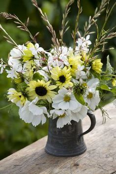 "Sunflower 'Vanilla Ice' with cosmos 'Purity' and Gaura ""The Bride"". June to October."