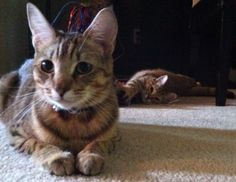 Kitties can photo bomb