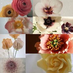 Downloadable PDF sugar flowers (gumpaste flowers) Tutorial booklet. Just £12 http://www.sweetassugarcakes.co.uk/#/pdf/4580564267  Flowers included: Ranunculus, Phalenopsis Orchid, Julia Rose, Oriental Poppy, Sweet Peas, Open Peony, Dahlia and Rose