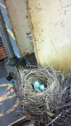 A robins nest inside the factory.