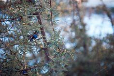 Wild juniper bush by eVision.pl on @creativemarket