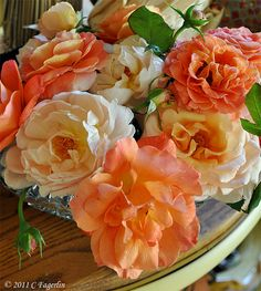 lovely fall colored roses!