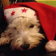 Mio Baddy Santa claus
