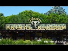 Messing about at animal kingdom, Disneyworld , Florida Visit Orlando, Adventures By Disney, Travel Videos, Animal Kingdom, Channel, Florida, Youtube, Animals, Animaux
