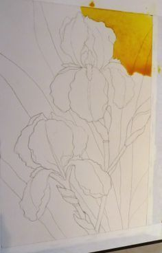 The Painted Prism: WATERCOLOR WORKSHOP: Painting Bearded Irises