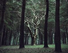 """wasted tree"" Mathew Harrington"