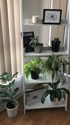 My new little plant corner, thank you Kmart for the ladder shelf