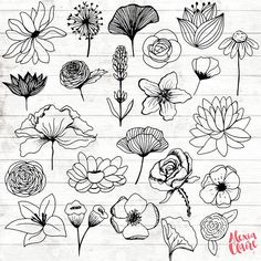 Flowers Clipart 23 Hand Drawn Floral Cliparts Realistic Floral Logo Art Flower Logo Elements Flower vector is part of Flower sketches extendedlicense For any other extended commercial - Logo Floral, Flower Logo, Hand Illustration, Doodle Drawings, Easy Drawings, Easy Flower Drawings, Flower Drawing Tutorials, Tattoo Drawings, Logo D'art